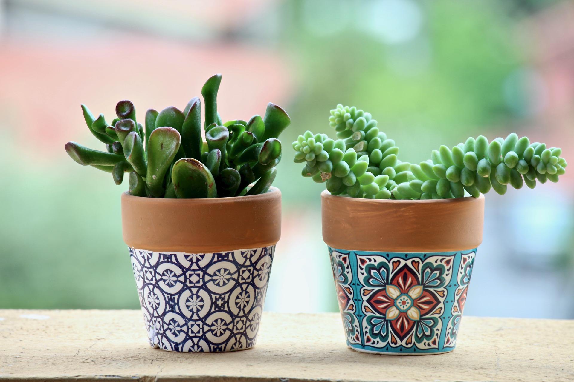 Quelle Plante En Pot Pour Terrasse les meilleurs plantes extérieures pour une terrasse