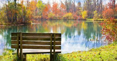 paysage d'automne avec des arbres et des feuilles oranges et vertes devant un lac et un banc en bois