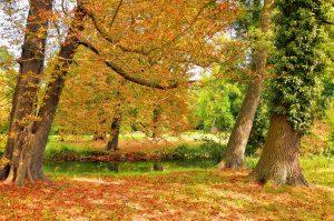 paysage d'automne avec des arbres et des feuilles oranges et vertes