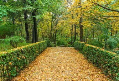 alle avec arbres et feuilles jaunes