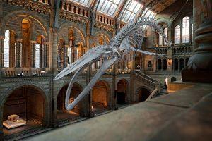 squelette de dinosaure dans un musée