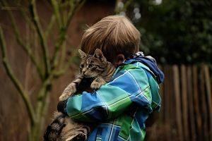 chat tigré dans les bras d'un enfant